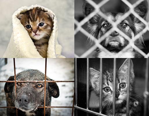 Banner of 4 rescue animals