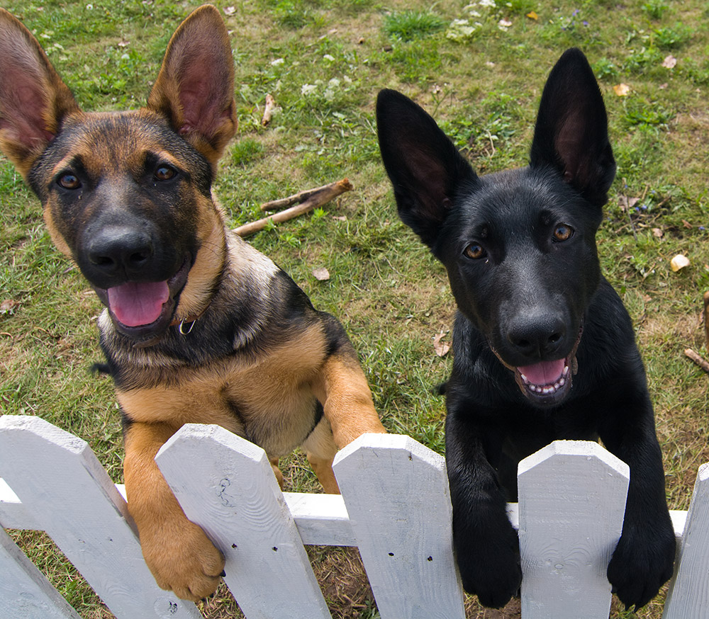 cute and happy dogs