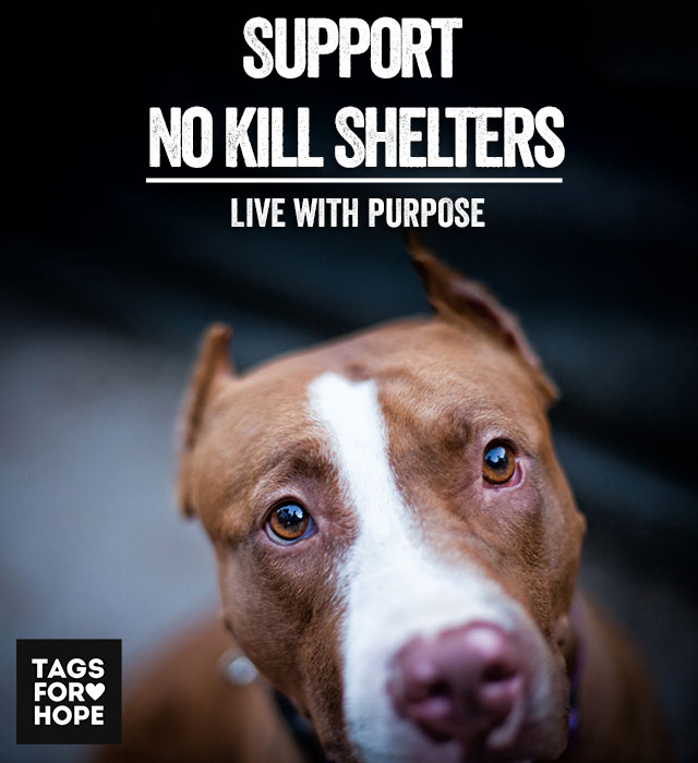 nokill shelter poster for mobile