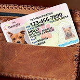 wallet id cards image