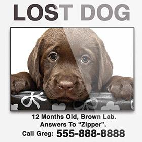 Missing Pet Image