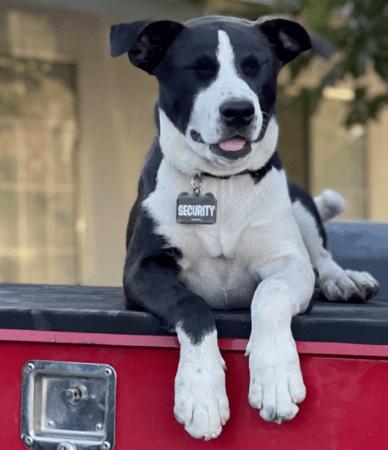 Dog hanging off truck