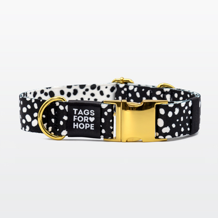 image of a collar, tag and leash